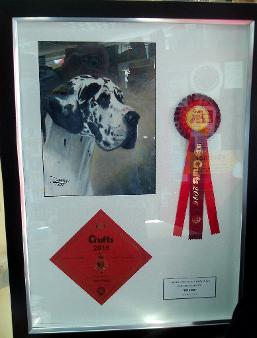 Crufts winner and rosette